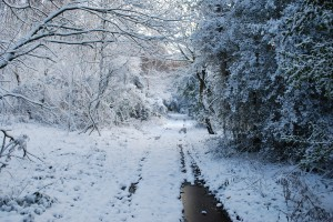 A Sussex Snow  Scene